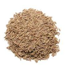 CUMIN SEED for sale