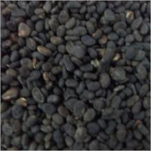 babchi seed extract