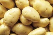 European Fresh Potatoes