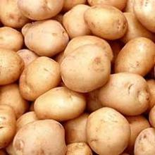 FRESH POTATOES FOR SALE AT BEST PRICE