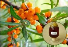 Best Essential Oil Seabuckthorn Fruit Oil Berry Oil Supplier