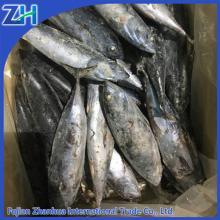 small size sea frozen  bonito  tuna for canning use