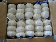 Garlic whole sale