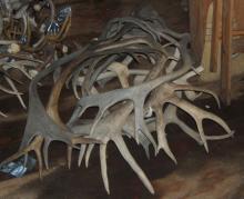 copy of red deer antlers