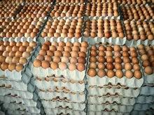 Farm Fresh chicken egg white and brown size for sale