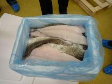 Stock  fish ,  Cod  fillet,fresh  cod   fish , frozen  cod   fish ,