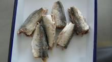 Canned Jack Mackerel