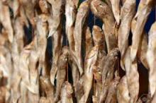 DELICIOUSE DRIED STOCK FISH FOR SALE