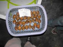 Topshell Snails (Trochidae) 10/20, 20/30, 30/50, 40/60, 50/80, 60/80, 80+