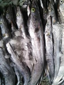 Fresh Ribbonfish AA+ 700~3,000 grams size Hook Line Catch