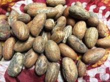 Natural Fresh Kola Nuts