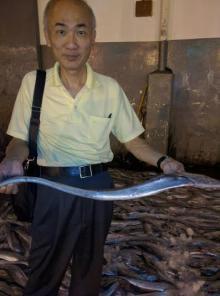 Fresh Ribbonfish AA+ (Japan/Taiwan quality standard) 700~3000 grams sizes