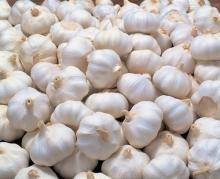Natural garlic/fresh white garlic/ purple garlic for sale