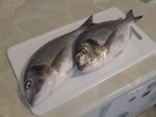 New Stock Frozen Black Sea Bream Fish 2-5kg