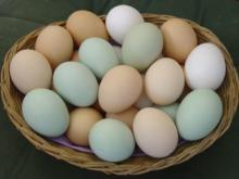 Fresh Brown Eggs available