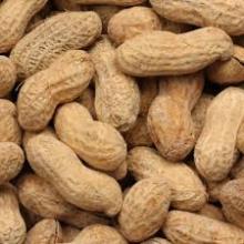 Crispy roasted peanut in shell