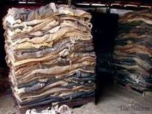 Wet Dry Salted Raw Cow Hides / Dry Salted Goat & Sheep Skins