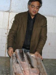 Frozen Indian Conger Eel, HGT / Fillets 500/700, 700/1000, 1000/2000 grams