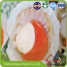Frozen Half-shell Scallop