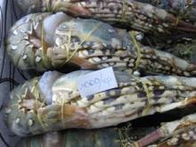 Fresh Lobsters/Seafood/Rock Lobsters