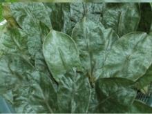 soursop/graviola leaf dried