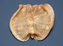 Best Grade Pagasius Hyphthalmus Fish Maw