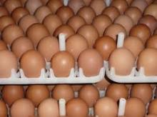 Table Chickens eggs Available
