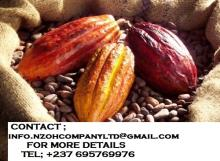 Cocoa/Cacao Beans