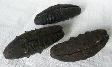 Wholesale Sea Cucumber / White and Black Teat Sea Cucumber