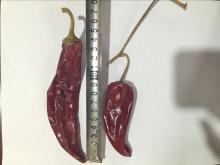 yidu  chili