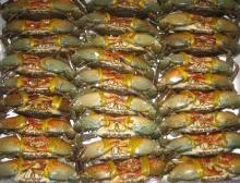 Frozen Crabs For Sale