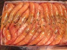 Argentina Red Shrimps