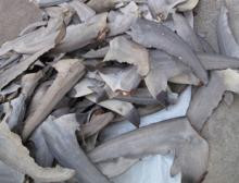 Dried Shark Fins For sale ( Grade AA )