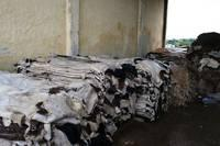 Dry Salted Cow Hides