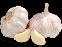 First grade fresh garlic
