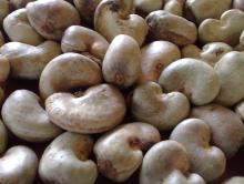 Cashew nut, raw cashew nut, Roasted cashew nut