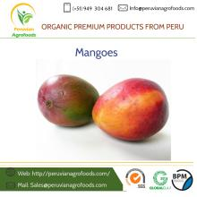 Fresh and Frozen Mango from Peru