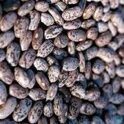 Wholesale Dry Beans Light Speckled Kidney Beans/.,
