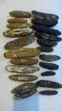 We sell all kinds of Dried Sea Cucumbers