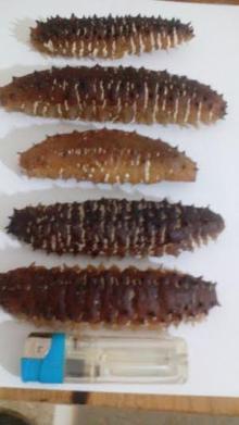 We sell Dried Sea Cucumbers / Sea Cucumbers 3