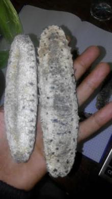 "All kinds of Dried Sea Cumbers 3"" to 12"" sizes Pakistan / Iran origins"