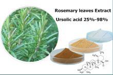 Rosemary leaves Extract Ursolic acid