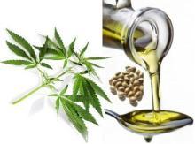 Hemp Seed Oil / Organic Hemp Seed Oil