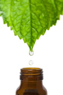 Factory Supply Peppermint essential oil