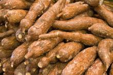 Fresh cassava for sale at best prices