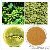 Green Coffee Bean Extract with 50% Chlorogenic acid Green Coffee Bean Extract