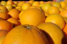 FRESH NAVEL AND VALENCIA ORANGES FROM SOUTH AFRICA
