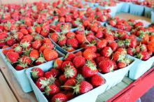 Fresh Fuji Apple Fruit , Fresh Strawberry, Fresh Navel Oranges