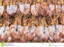 Wholesale Illex Dried Squid