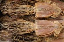 Good quality of dried black squid